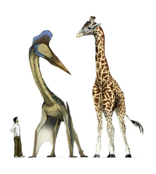 Wall Art - Photograph - Pterosaur With Human And Giraffe by Mark P. Witton/science Photo Library