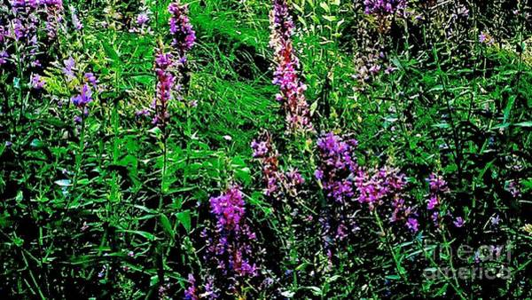 Photograph - Purple by William Norton