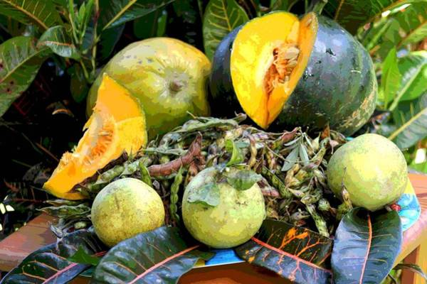 Posterize Photograph - Puerto Rican Harvest by The Art of Alice Terrill