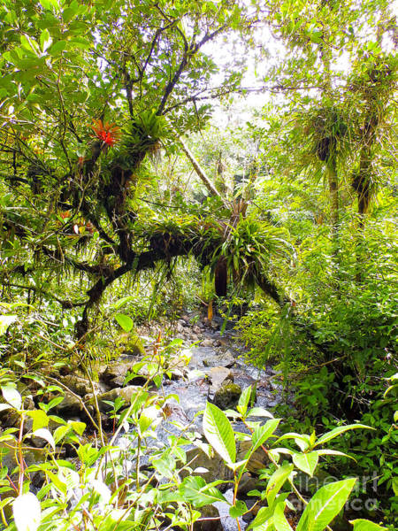 Photograph - Puerto Rican Rainforest With Creek 2 by G Matthew Laughton