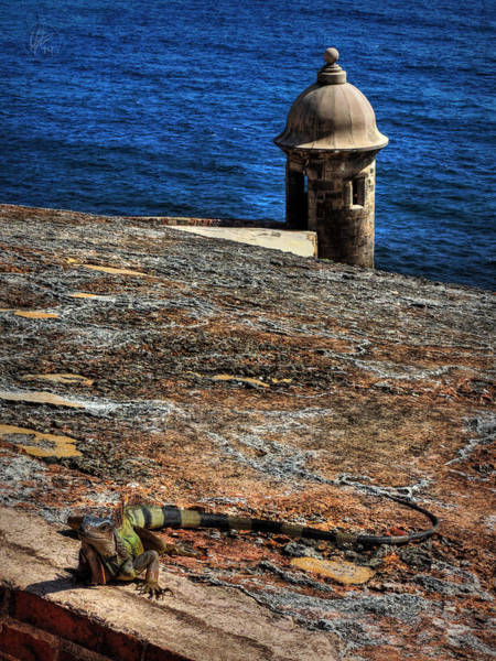 Photograph - Puerto Rico Iguana 004 by Lance Vaughn