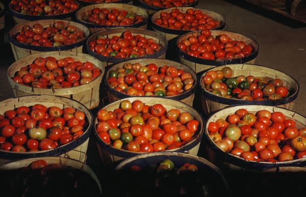 Photograph - Puerto Rico Tomatoes by Granger