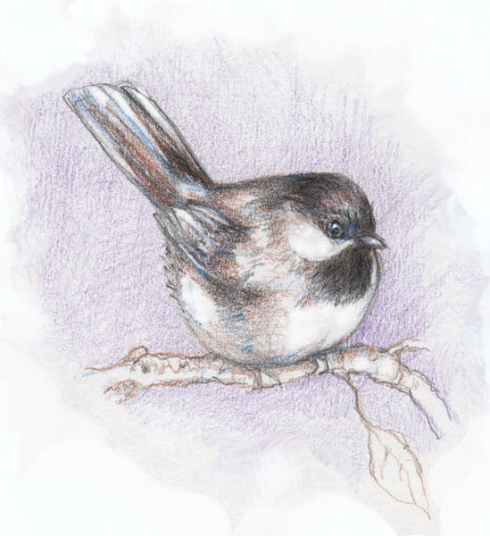 Colored Pencils Mixed Media - Puffed Up Chickadee by Peggy Wilson