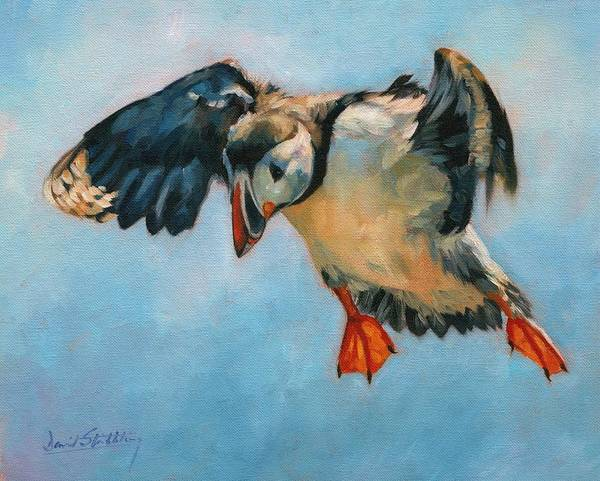 Puffins Wall Art - Painting - Puffin by David Stribbling