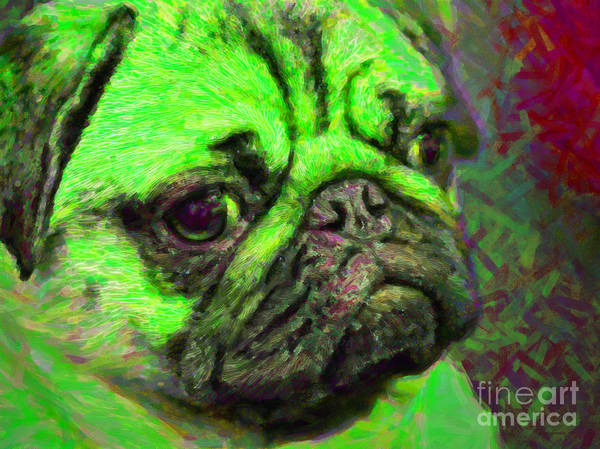 Photograph - Pug 20130126v4 by Wingsdomain Art and Photography