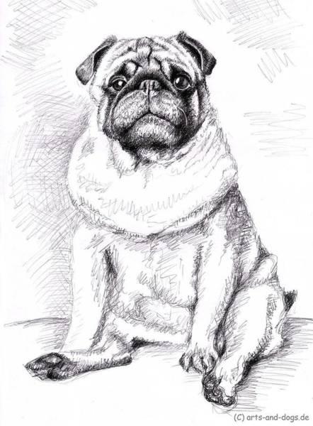 Hund Drawing - Pug Anton by Nicole Zeug