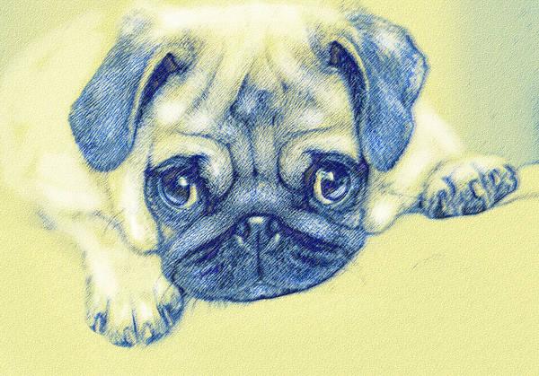 Wall Art - Digital Art - Pug Puppy Pastel Sketch by Jane Schnetlage