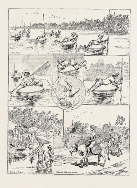 Wall Art - Drawing - Pulla Fishing On The Indus by Litz Collection