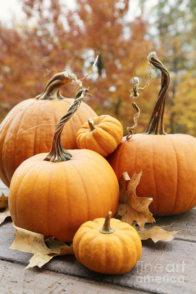 Photograph - Pumpkin And Gourds With Leaves  by Sandra Cunningham