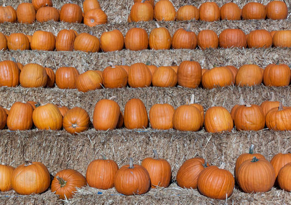 Photograph - Pumpkin by Lora Lee Chapman