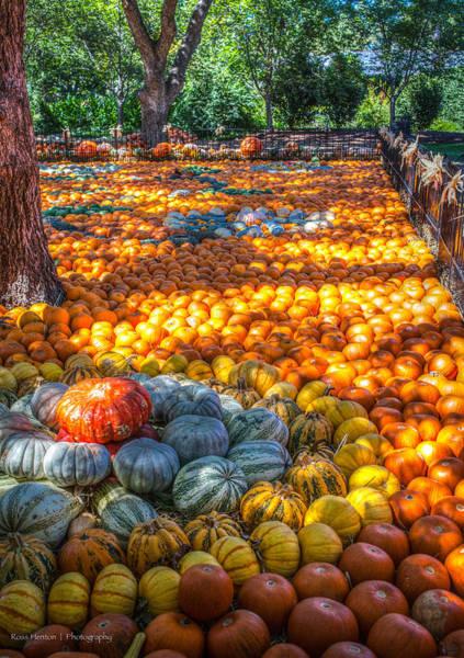 Photograph - Pumpkin Patch by Ross Henton