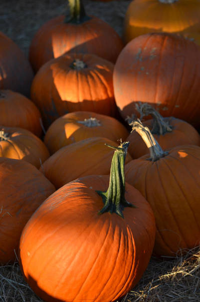 Photograph - Pumpkin Patch by Toby McGuire