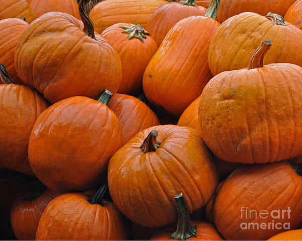 Nikon D5000 Photograph - Pumpkin Pile by Tikvah's Hope