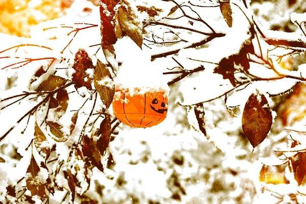 Photograph - Pumpkin Snow Glow by Denise Tomasura