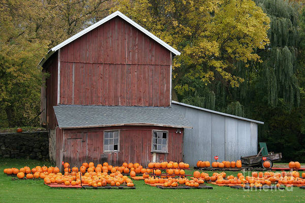 Photograph - Pumpkins by PJ Boylan