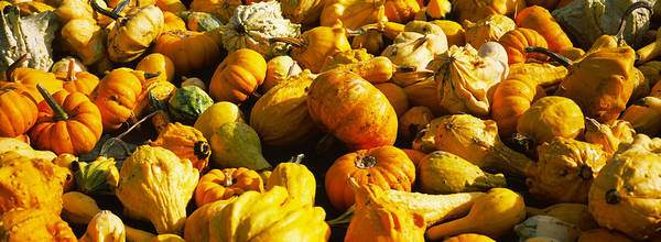 Vegetable Patch Wall Art - Photograph - Pumpkins And Gourds In A Farm, Half by Panoramic Images