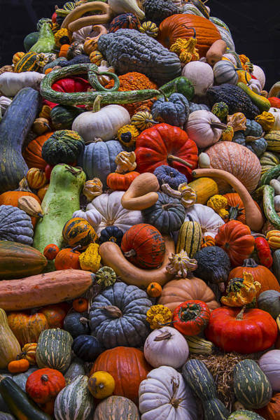 Gourd Photograph - Pumpkins And Gourds Pile by Garry Gay