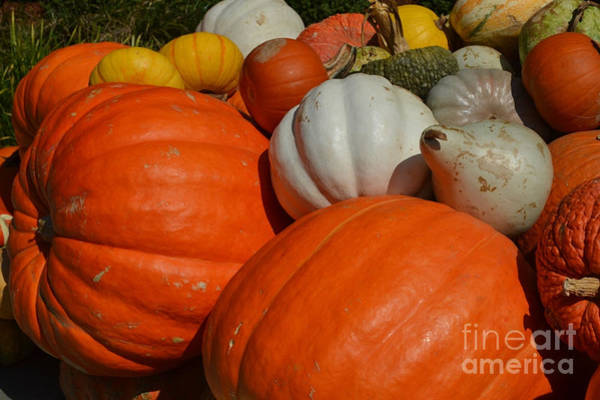 Wall Art - Photograph - Pumpkins And Gourds by Ruth  Housley