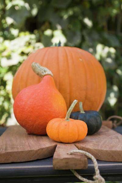 Cucurbit Photograph - Pumpkins And Squashes On Chopping Board In The Open Air by Foodcollection