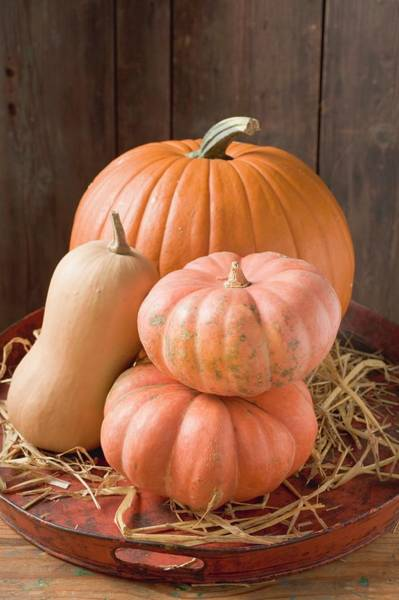 Cucurbit Photograph - Pumpkins And Squashes On Old Tray In Front Of Wooden Wall by Foodcollection