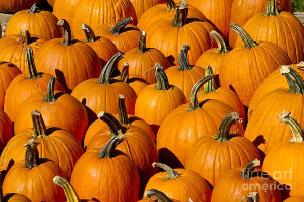 Photograph - Pumpkins by Anthony Sacco