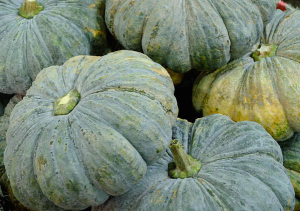 Photograph - Pumpkins by August Timmermans