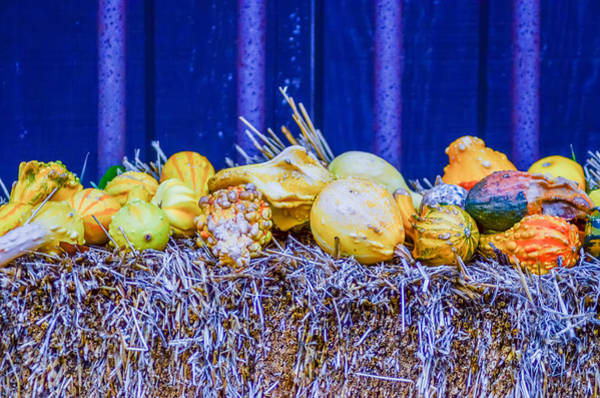 Photograph - Pumpkins Decorations by Alex Grichenko