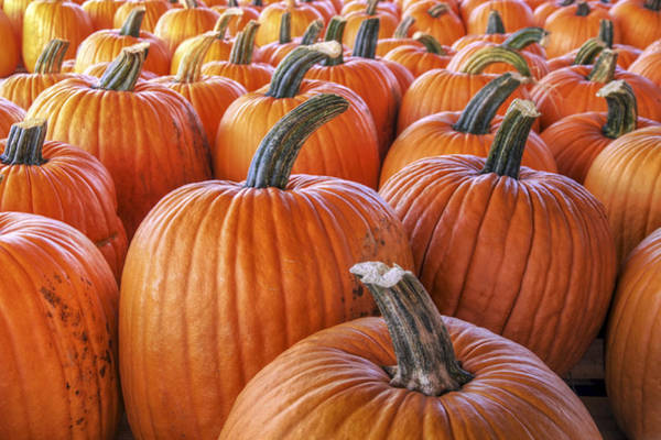 Photograph - Pumpkins Galore - Autumn - Halloween by Jason Politte