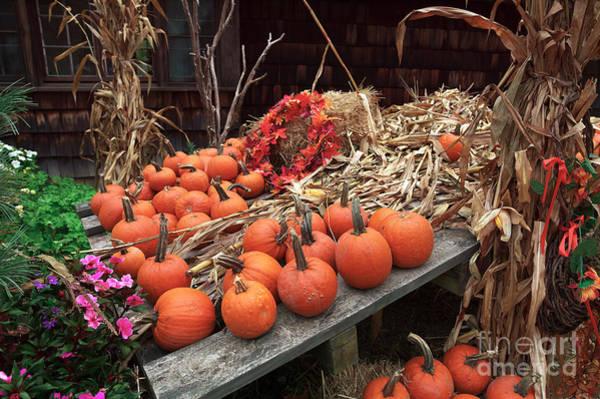 Photograph - Pumpkins In The Wagon by John Rizzuto