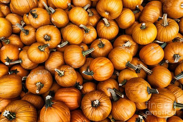 Photograph - Pumpkins by Mark Miller