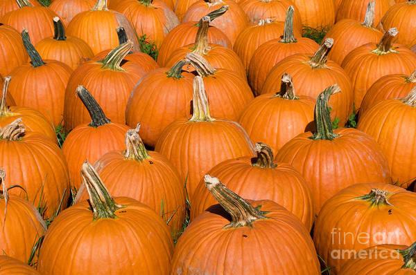 Photograph - Pumpkins by Millard H Sharp