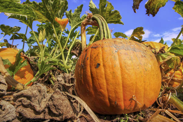 Photograph - Pumpkins Of The Patch - Autumn - Halloween by Jason Politte