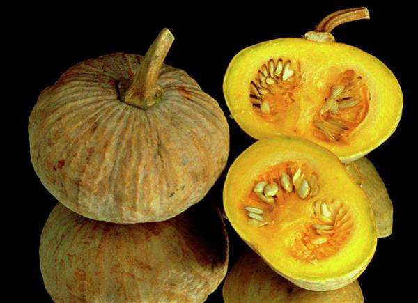 Cucurbita Wall Art - Photograph - Pumpkins by Th Foto-werbung/science Photo Library