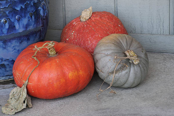Cambria Photograph - Pumpkins With Blue Planter by Art Block Collections