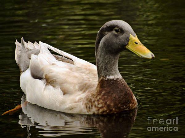 Photograph - Punaluu Beach Duck by Patricia Griffin Brett