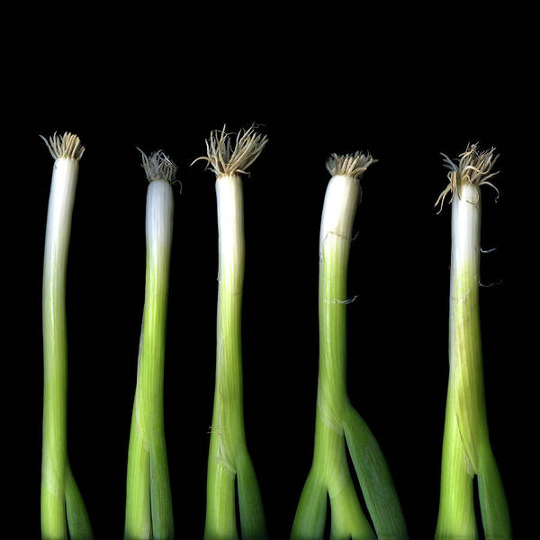 Scallion Photograph - Punk Spring Onions by Photograph By Magda Indigo