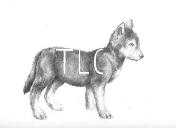 Pup Drawing - Pup by Alexander M Petersen