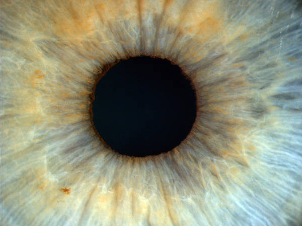 Eye Ball Photograph - Pupil by Paul Whitten