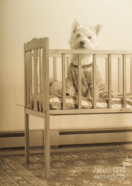 Photograph - Puppy Dog In A Baby Crib by Edward Fielding