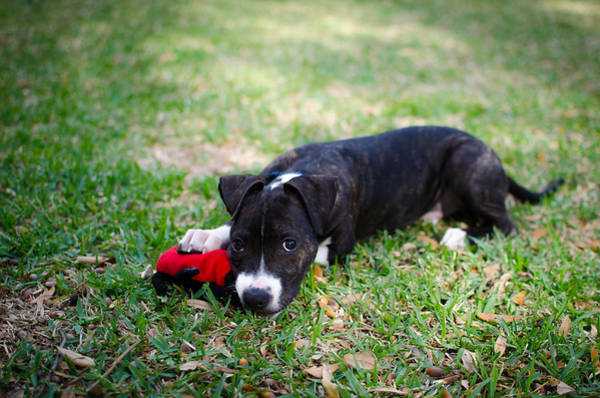 Photograph - Puppy Eyes by David Morefield