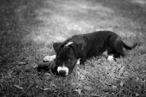 Photograph - Puppy Eyes In Black And White by David Morefield