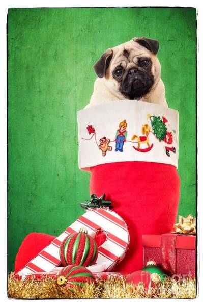 Photograph - Puppy For Christmas by Edward Fielding