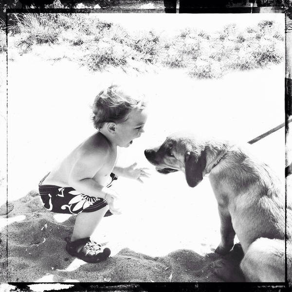 Photograph - Puppy Love by Natasha Marco