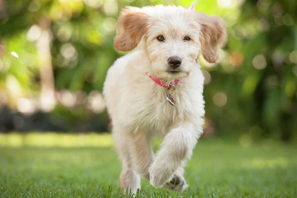 Bradenton Wall Art - Photograph - Puppy Running Through The Grass by Chris Stein