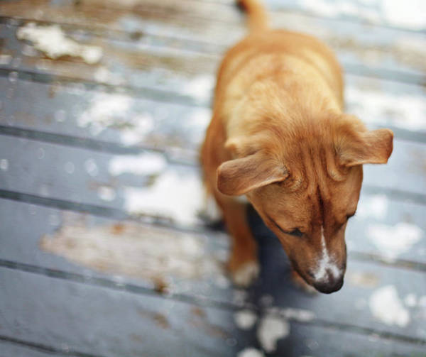 Boat Deck Photograph - Puppy Sitting On Wooden Deck by Nicole Kucera