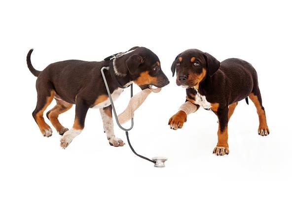 Litter Photograph - Puppy Veterinarian And Patient by Susan Schmitz
