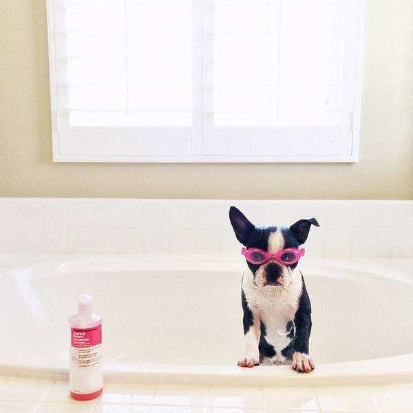 Puppy Photograph - Puppy Wearing Goggles by Michelle Nicoloff