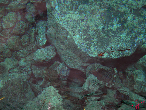 Photograph - Pure Fine Ocean Santorini Island Greece Swim Dive Water by Colette V Hera  Guggenheim
