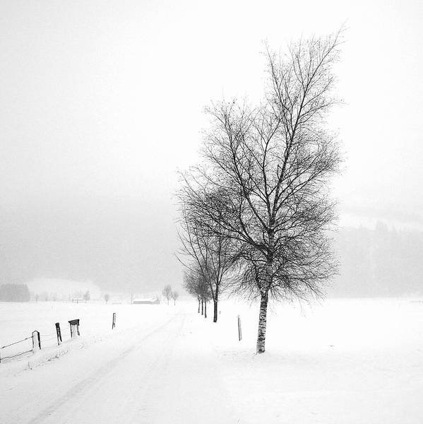 Photograph - Pure White by Anita Kovacevic
