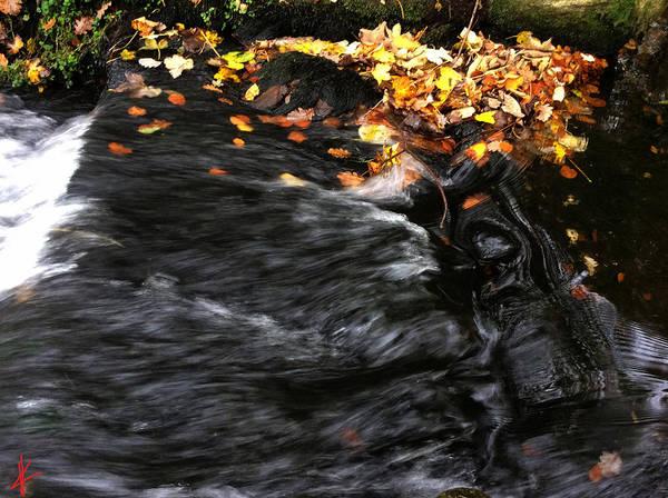 Photograph - Pure Wild Autumn Denmark by Colette V Hera  Guggenheim